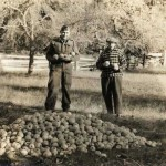 A photo from the farm of Mr. J. H. Monk. It is thought that the man in uniform was Harry Bapty, who married Margaret Monk, daughter of Mr. J. H Monk. It is also assumed this photo was taken in the 1940's or 1950's. Generally apples on the ground like this were going to processing plants, for jams. Any apples for fresh eating would have been packed immediately into boxes to keep them from bruising.