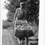 Geoff Scott wheels in apples from his orchard in the Long Harbour area about 1920.