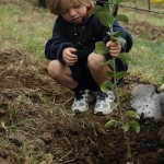 A youngster gets to plant a young apple tree at the Salt Spring Apple Company during Apple Festival 2011. These trees were all growing in pots, so visitors on Oct 2, were asked to plant an apple tree if they wished. What a great treat for Apple Festival goers. http://www.saltspringapplecompany.com/ Photo by Karen Mouat