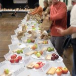 Time to take the apples out of the bags. The rule is that NO APPLES GET TAKEN OUT OF THE BAGS UNTIL EVERYTHING IS ORGANIZED INCLUDING LABELS AND ALSO LITTLE COLOURED DOTS ON LABELS TO SHOW WHO GREW THIS VARIETY. So taking out of bags is an exciting time. John Rowlandson is in foreground. He is the person who photographs the entire display on Sunday Morning. Photo by Ellie Parks.